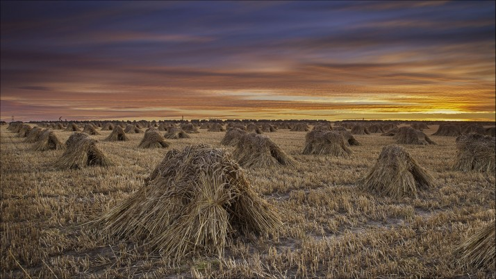 Harvest Field Bundle Sunset wallpapers and stock photos