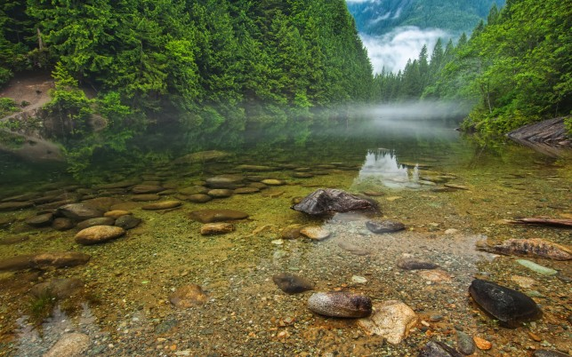 Green Forest Clear River Rocks wallpapers and stock photos