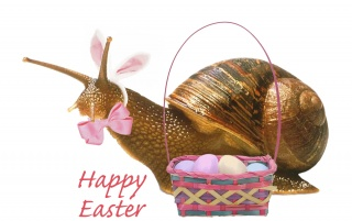 Easter Snail wallpapers and stock photos