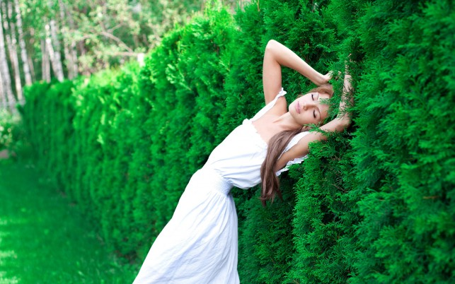 Dreaming At The Hedge wallpapers and stock photos