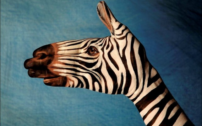Zebra Hand Painting wallpapers and stock photos