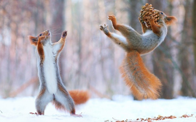Squirrel Sports wallpapers and stock photos