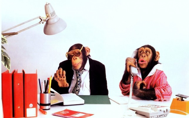 Monkey Business wallpapers and stock photos