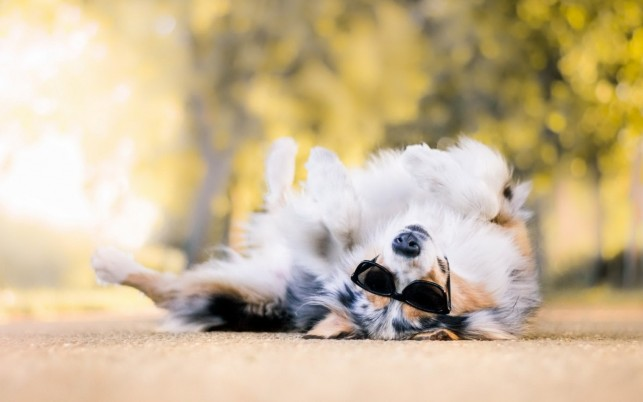 Cool Dog wallpapers and stock photos