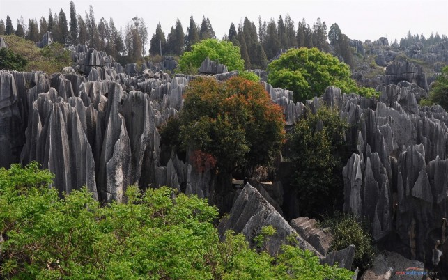 Stone Forest Yunnan China wallpapers and stock photos