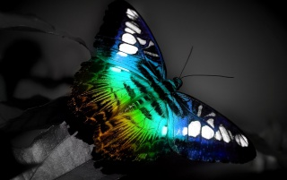 Random: Butterfly Light