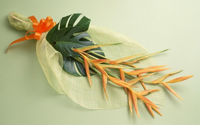 Strelitzia Bouquet wallpapers and stock photos