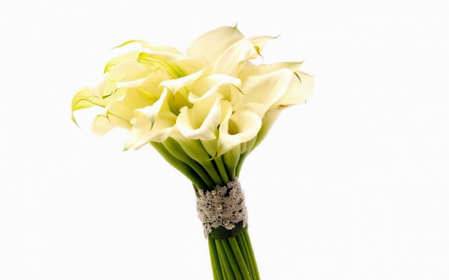 Calla Lily Bouquet wallpapers and stock photos