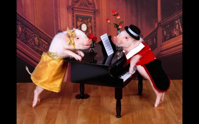Romantic Pigs wallpapers and stock photos