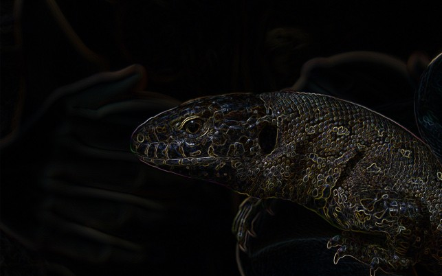 Dunkle Lizard wallpapers and stock photos