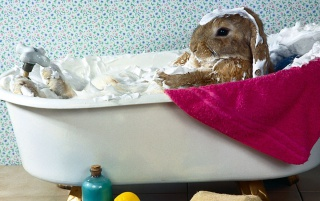 Easter Bunny Bath wallpapers and stock photos
