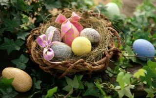 Eggs in a Nest wallpapers and stock photos