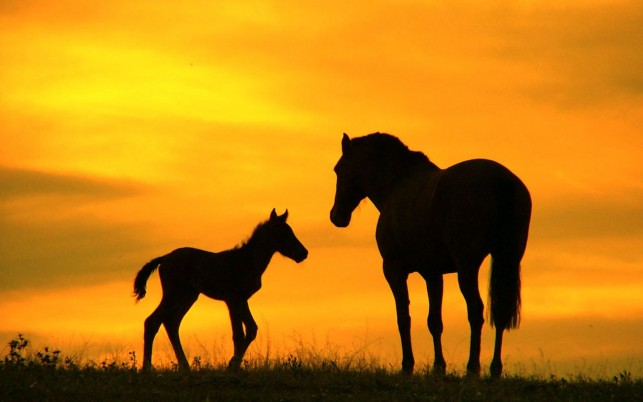 Caballo, silueta, ocaso, caballos wallpapers and stock photos