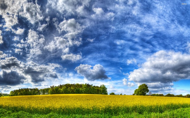 Yellow field, summer, cloud, sky, tree, nature wallpapers and stock photos