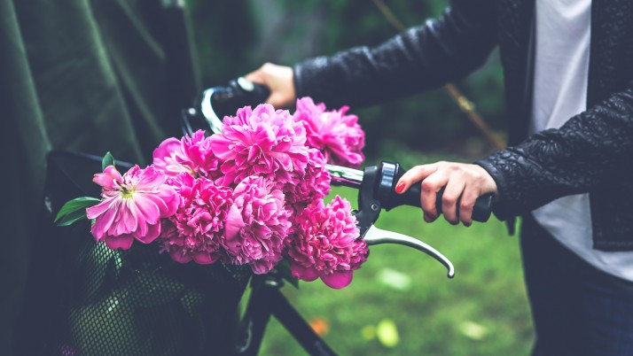 Flowers Peonies Bicycle Hand wallpapers and stock photos