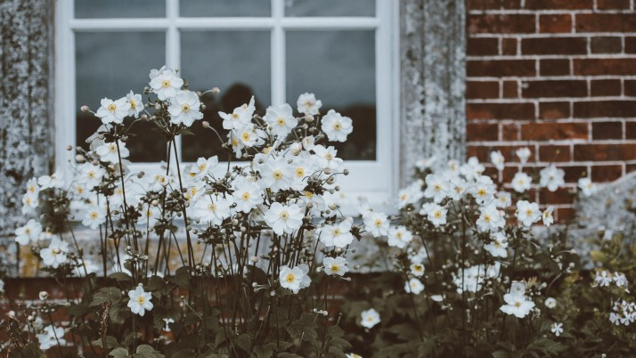 Window Flower Bed wallpapers and stock photos