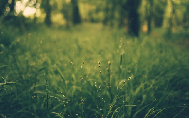 Grass Blur Field wallpapers and stock photos