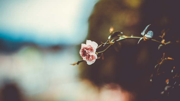 Flower Branch Blur wallpapers and stock photos