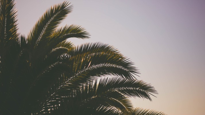 Palm Tree Branches Sky wallpapers and stock photos