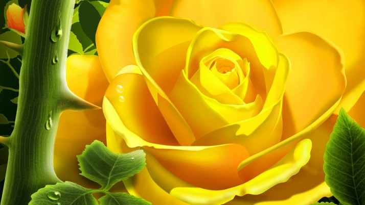 Rose Flower, flowers wallpapers and stock photos