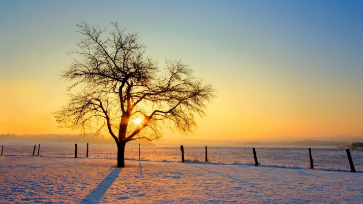 Lone tree in the winter, snow, nature wallpapers and stock photos