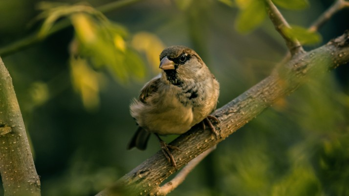 Sparrow Bird Blur wallpapers and stock photos