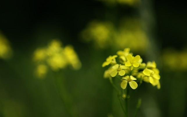 Next: Yellow Spring Flowers