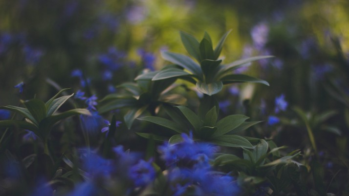 Plants Foliage Blurred wallpapers and stock photos