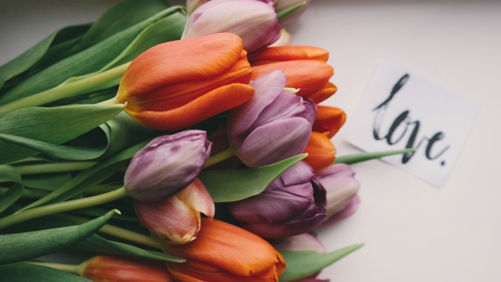 Tulipanes Bouquet Buds wallpapers and stock photos