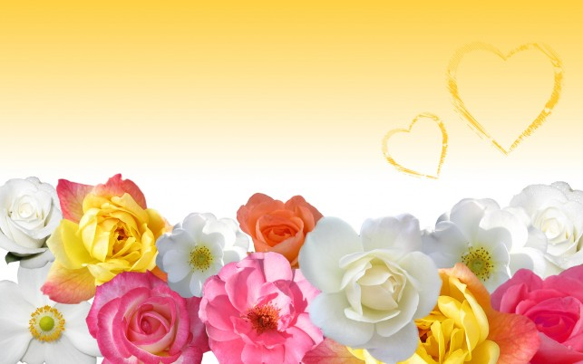 Flower, yellow, savers wallpapers and stock photos