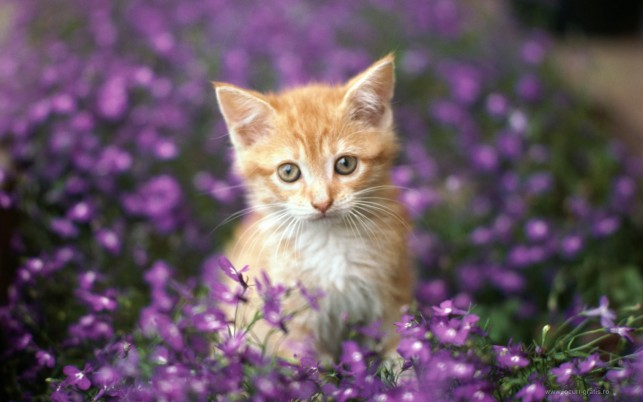 Cat Flowers, sweet wallpapers and stock photos