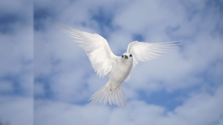 White Bird wallpapers and stock photos
