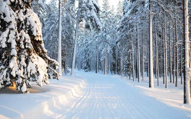 Winter, tree, snow, forest, nature wallpapers and stock photos