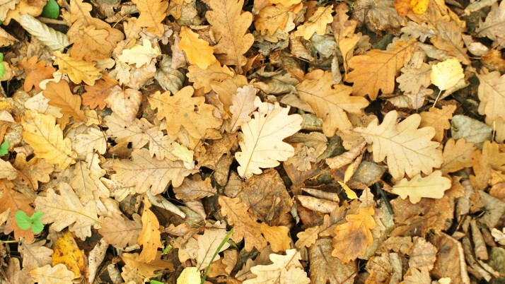 leaves, autumn, fallen wallpapers and stock photos