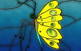 Stained Butterfly wallpapers and stock photos