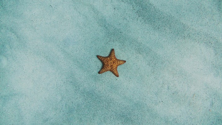 starfish, sand, surface wallpapers and stock photos