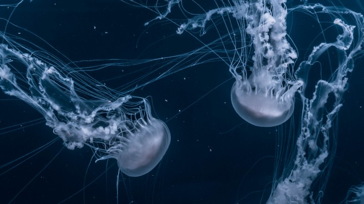 jellyfish, underwater world, s wallpapers and stock photos