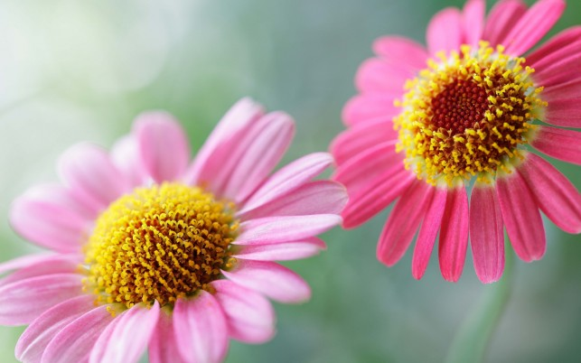 Flower,  pink wallpapers and stock photos
