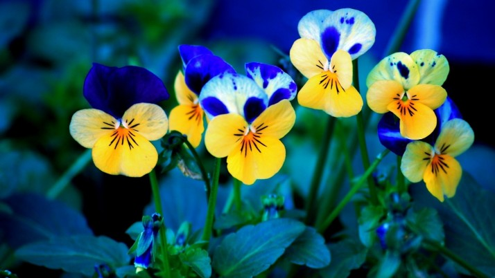 Flowers wallpapers and stock photos