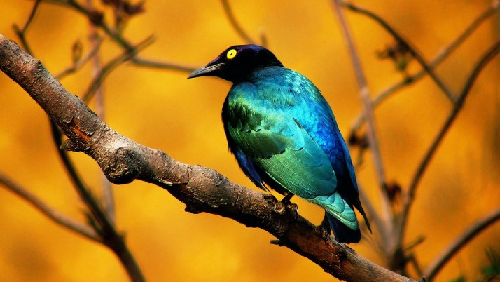 Bird  blue wallpapers and stock photos