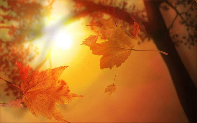 Autumn Abstract wallpapers and stock photos