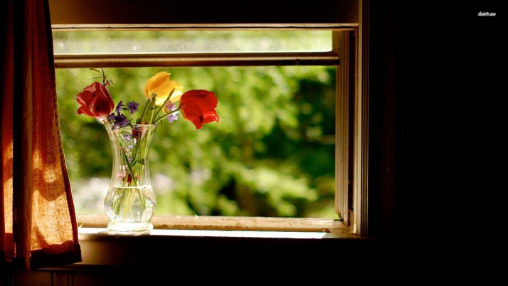 Tulips in the window, vase, flowers wallpapers and stock photos