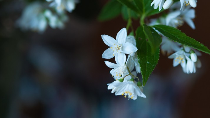 White blossoms wallpapers and stock photos