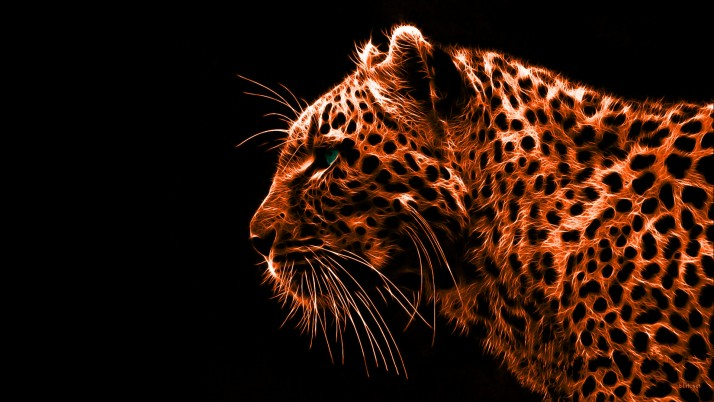 Leopard, profile wallpapers and stock photos