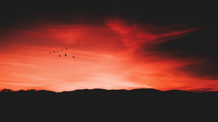 Previous: birds, night, sky, horizon
