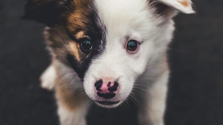 puppy, muzzle, spotted, cute wallpapers and stock photos