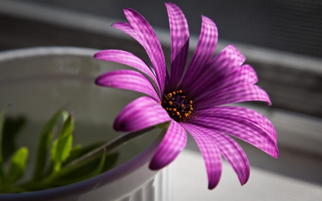 Purple Flower wallpapers and stock photos