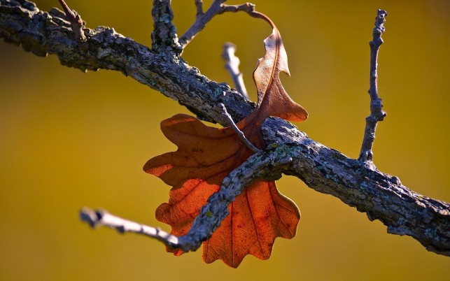 Fall leaf, autumn, nature wallpapers and stock photos