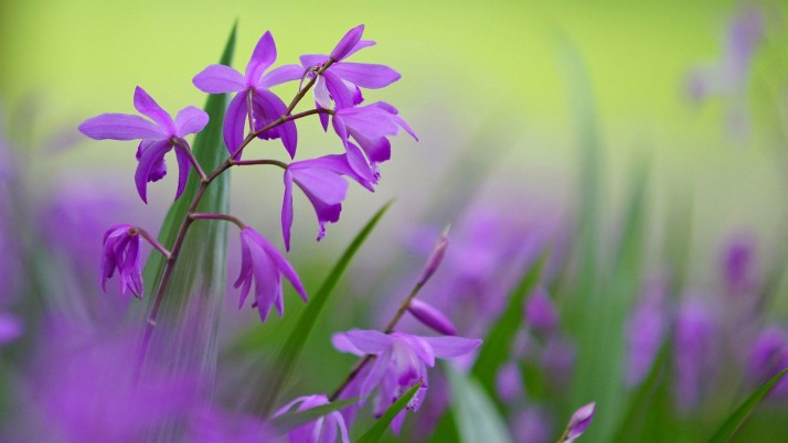 Purple flowers wallpapers and stock photos
