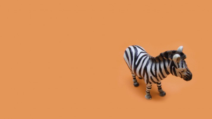 Previous: Zebra, creative